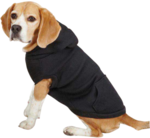 Beagle_with_hoodie-9